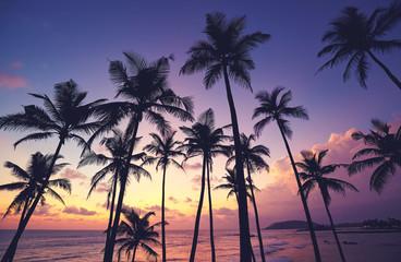Coconut palm trees silhouettes at purple sunset, Sri Lanka. Wall mural