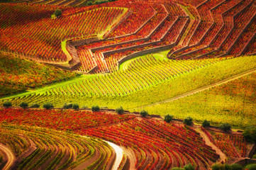 Printed kitchen splashbacks Orange Vineyards in Douro river valley in Portugal. Portuguese wine region. Beautiful autumn landscape