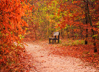 Bench with trees in autumn