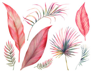 Fototapeta Watercolor tropical leaves set. Hand drawn exotic greenery isolated on white background. Botanical clip art. Summer plants illustration: banana tree, palm, sprout obraz