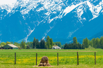 View at fantastic mountains in British Columbia, Canada.