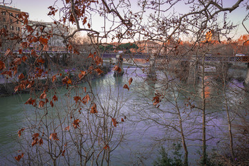 Cityscape through autumn branches on the Tiber river in Rome, Italy