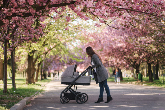 Happy mom walk with her little baby girl in stroller. Background of pink sakura tree