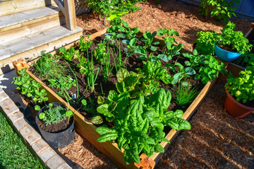 Papiers peints Jardin Fresh food from your own garden is part of a healthy lifestyle. Planted in spring, this raised backyard garden bed is loaded with a variety of herbs and vegetables ready to be harvested in summer.