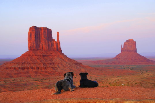Two dogs laying on the ground and staring at the buttes near Monument Valley National Park, Arizona, U.S.A
