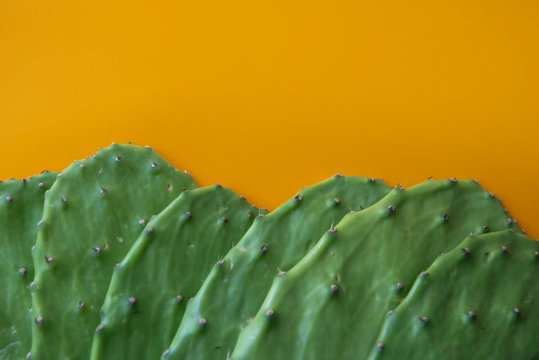 Opuntia cactus Nopal on yellow background