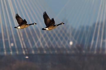 Recess Fitting Bird birds in flight