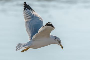 Recess Fitting Bird seagull in flight