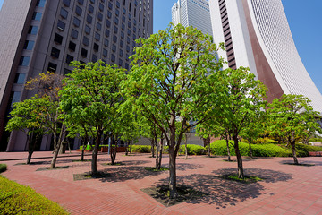 Green area of business district.  ビジネス街 緑地