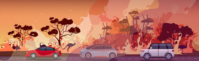 cars and animals escaping from forest fires in australia wildfire bushfire burning trees natural disaster evacuation concept intense orange flames horizontal vector illustration