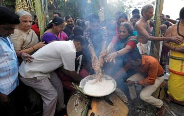 Tamil devotees cook pongal during the Tamil harvest festival of Thai Pongal