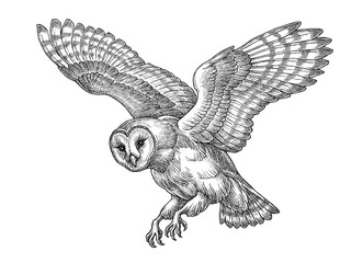 Hand drawn illustration in the engraving style, flying owl.