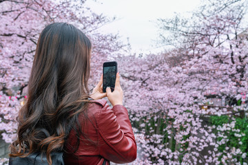 Wall Mural - Woman take a photo at Cherry blossom along the Meguro river in Tokyo, Japan.