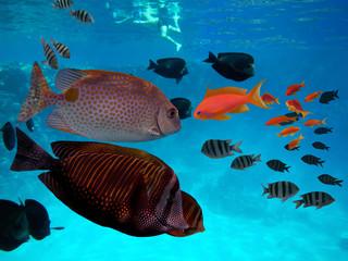 Man swims underwater in tropical sea.