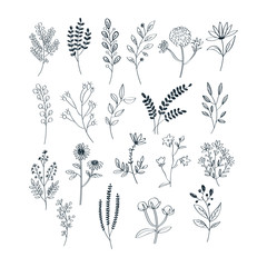Hand draw with herbs and flowers collection free vector