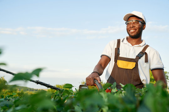 Smiling african male gardener cutting bushes with shears