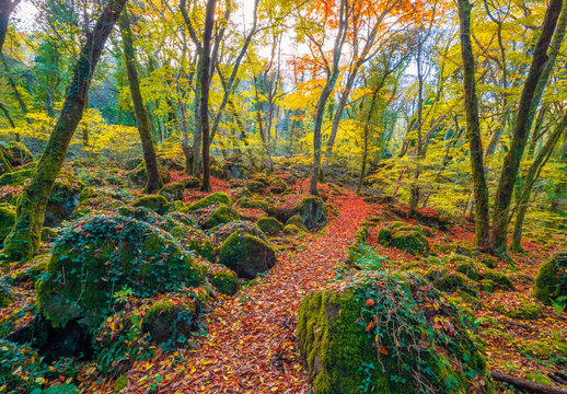 Torre Alfina (Lazio, Italy) - The sacred and magical wood called 'Bosco del Sasseto' during the autumn with foliage, beside the medieval village with castle