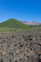 Teide and Montaña blanca volcanoes, with canarian green pines forest and volcanic landscape, and blue sky, Tenerife, Canary islands, Spain
