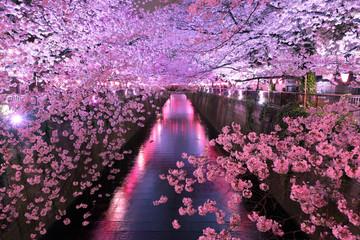 Keuken foto achterwand Kersenbloesem 目黒川の夜桜 ライトアップ