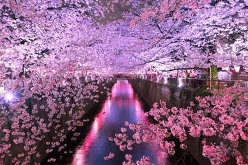 Foto op Canvas Kersenbloesem 目黒川の夜桜 ライトアップ