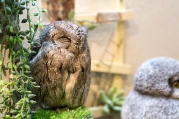 気持ちよさそうに眠る日本のフクロウカフェのフクロウ