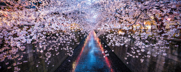 Foto op Plexiglas Kersenbloesem Nakameguro Sakura Festival in Tokyo