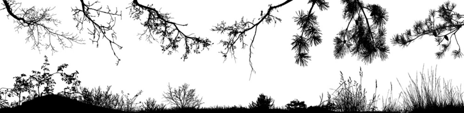 Set of natural tree branches, bushes and grass. Vector eps10.