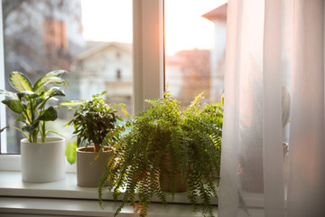 Different potted plants on window sill at home
