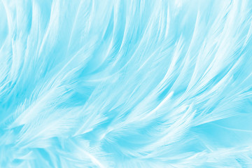 Blue feathers vintage background, smooth white feather background