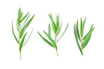 Tuinposter Gras tarragon or estragon isolated on a white background. Artemisia dracunculus