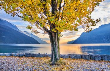 Italy, Trentino, Nago-Torbole, Autumn tree growing on shore of Lake Garda