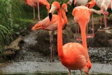 In de dag Flamingo flamingo in zoo