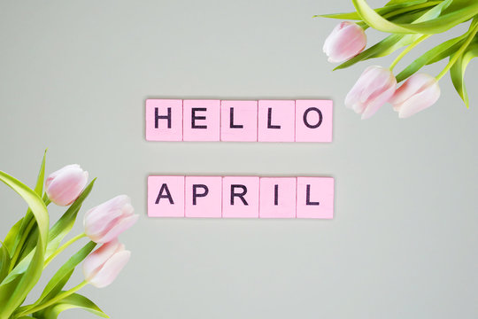 Hello April word, on a background with tulips. Spring concept