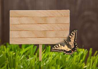 Signboard Spring on Grass background of wood planks, with butterfly Fresh green lawn near rustic grunge fence
