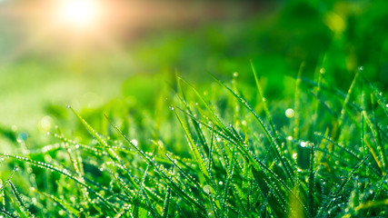 Spring green background. Green grass with dew drops, closeup. Sunny spring light reflected on drops...
