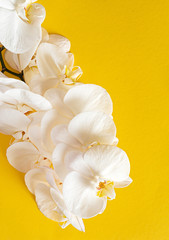 Tuinposter Orchidee fresh white orchid on the color background