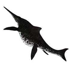 Shonisaurus Ichthyosaur Tail - Shonisaurus popularis was an Ichthyosaur that lived in the seas of North America during the Triassic Period.
