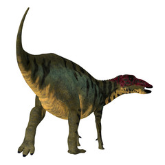 Shuangmiaosaurus Dinosaur Tail - Shuangmiaosaurus was an iguanodont herbivore dinosaur that lived during the Cretaceous Period of China.