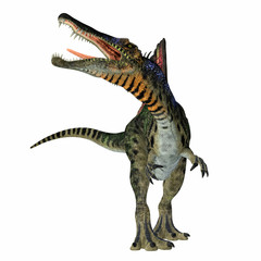 Spinosaurus Dinosaur on White - Spinosaurus was a carnivorous dinosaur that hunted in Africa during the Cretaceous Period.