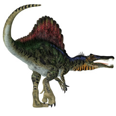Spinosaurus Dinosaur Tail - Spinosaurus was a carnivorous dinosaur that hunted in Africa during the Cretaceous Period.