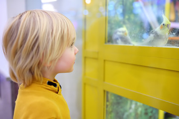 Little boy is watching a parrot sitting in a cage in zoo shop.