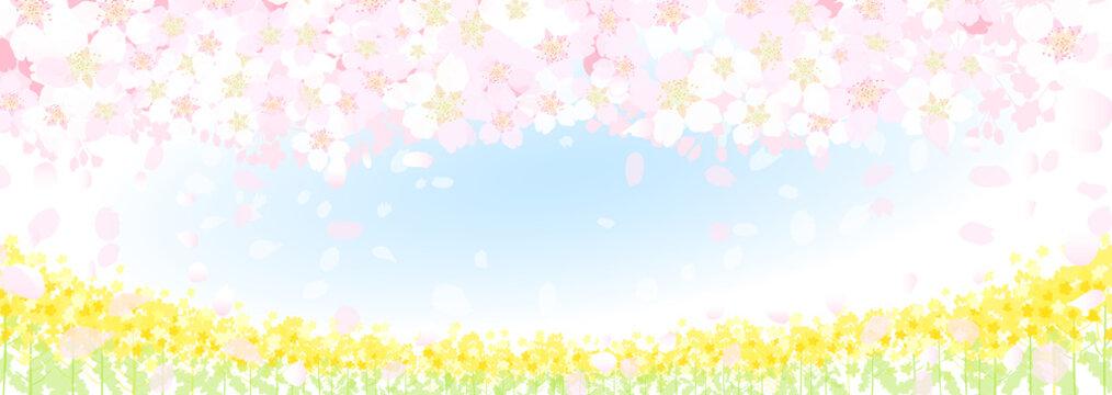 桜 菜の花 春の空