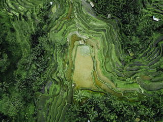 Birds eye view of green rugged hilly topography