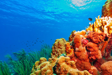 Beautiful vibrant healthy coral reef with schooling fish and brown chomis