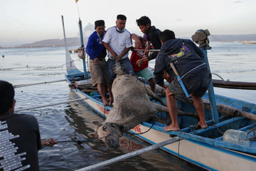 An injured horse rescued by residents near the errupting Taal Volcano falls from their boat, in Talisay