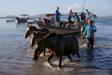 Horses arrive after being rescued by their owners from their homes near the errupting Taal Volcano