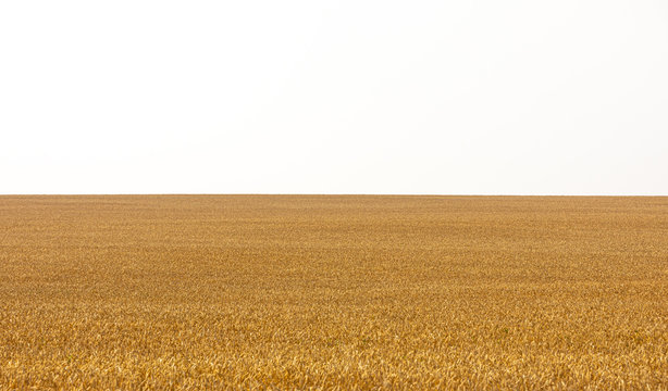 simple yellow field pattern with white stap