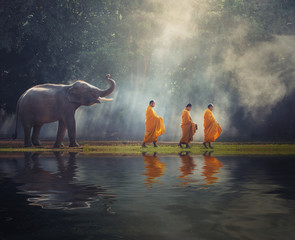 Poster Boeddha Thailand Buddhist monks walk collecting alms with elephant is traditional of religion Buddhism on faith Thai people