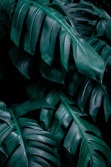 Wall Mural - green leaf background, tropical leaf, abstract green leaf texture