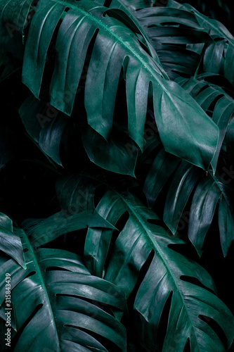 Wall mural green leaf background, tropical leaf, abstract green leaf texture